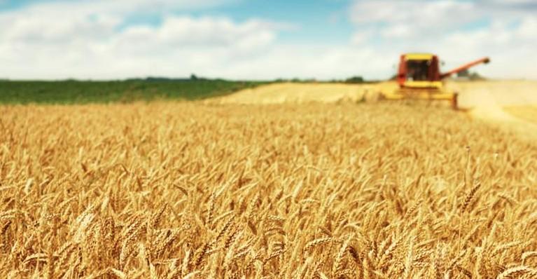 Климатът и covid-19 оскъпяват храната