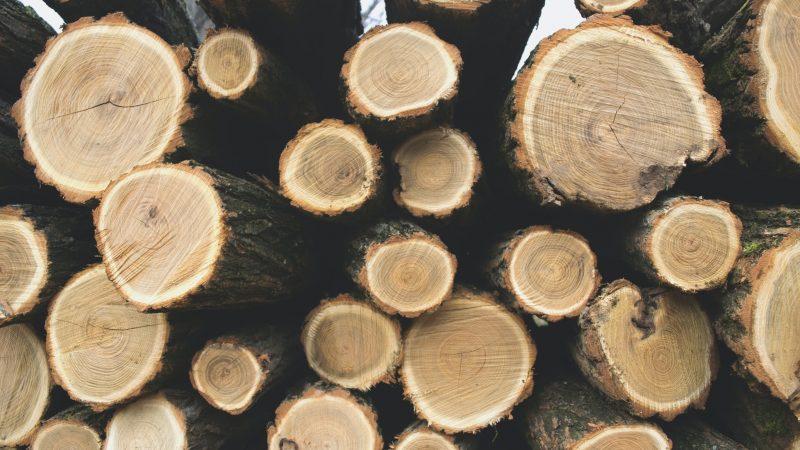 100 благотворителни организации призовават ЕС да спре биогоривата